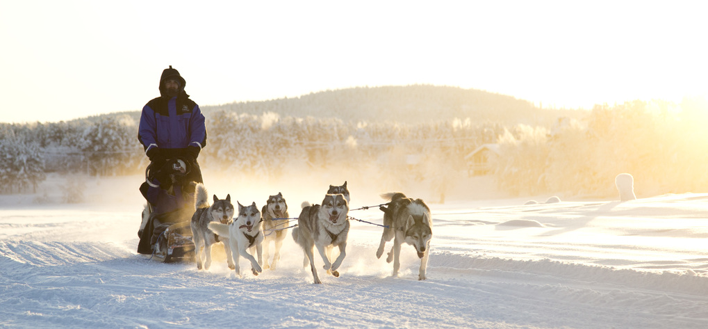 Husky wildernesshotels %281%29