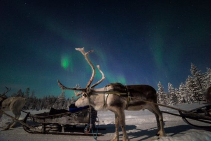 Night time reindeer safari